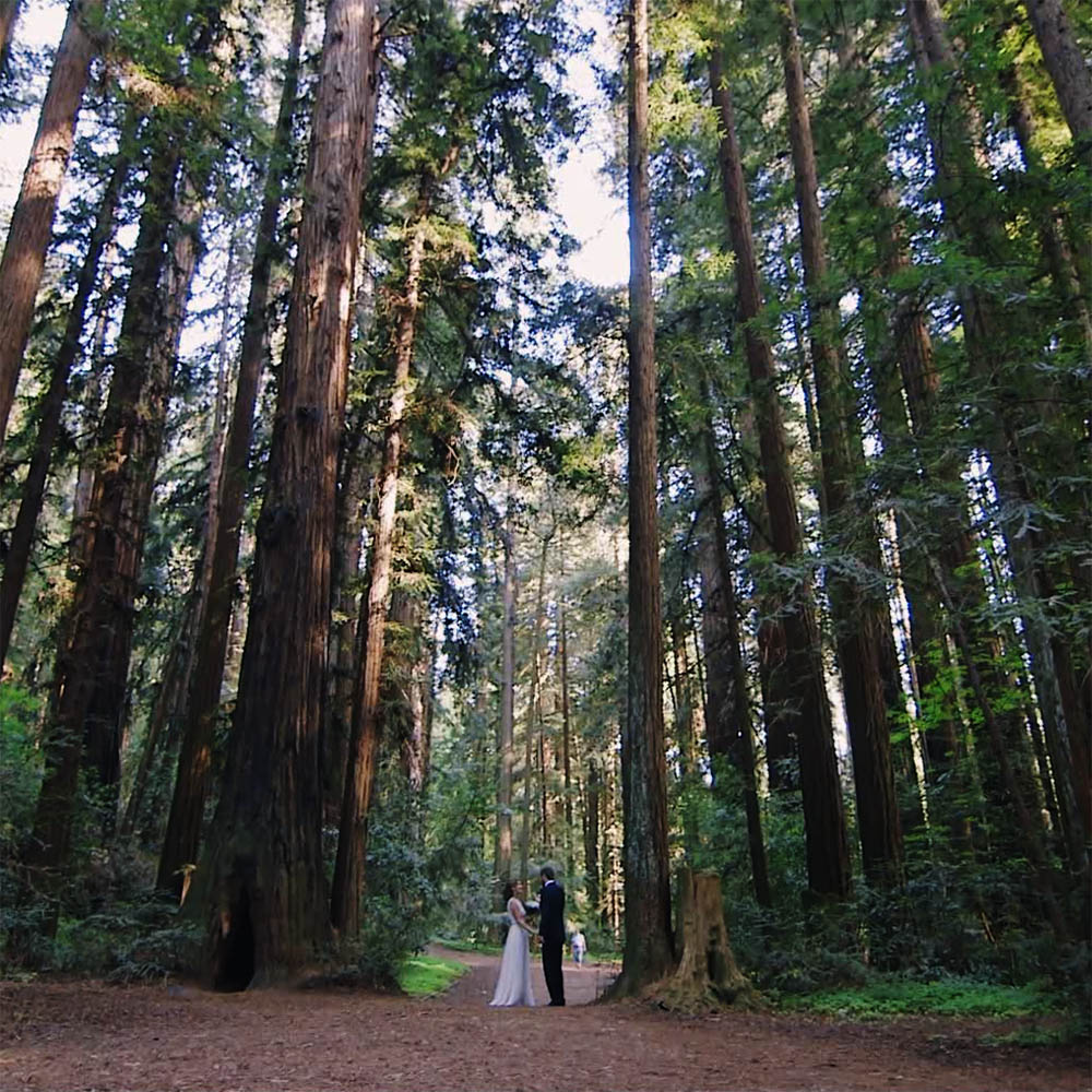 redwood elopement wedding